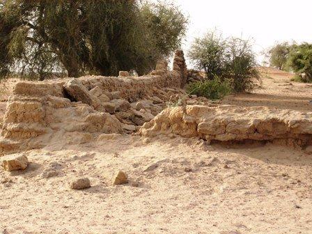 varemed Mali lahistel